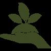 manejo-de-plantaciones